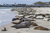 Жизнь тюленя: мечта!, Фото: 9