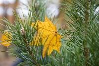 В Центральном парке Тулы появился сосновый бор «Слободы», Фото: 31
