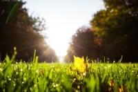 Центральный парк, утро, осень, Фото: 44
