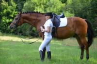 В Ясной поляне стартовал турнир по конному спорту, Фото: 27