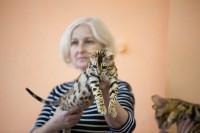 В Туле прошла выставка «Пряничные кошки» , Фото: 4