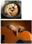 Коты спят где хотят, Фото: 4