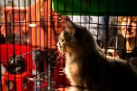 Пряничные кошки, Фото: 58
