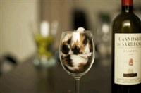 Жидкие коты, Фото: 5