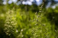 Летний день в Ясной Поляне, Фото: 2