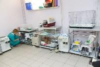 В какой ветеринарной клинике  лечить своего питомца, Фото: 5