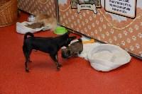Выставка собак DogLand, Фото: 26