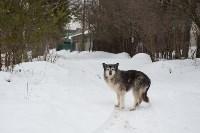 Крематорий для собак в Венёве, 24.03.2016, Фото: 37