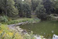 Туляки сообщают о массовой гибели уток в Платоновском парке, Фото: 14