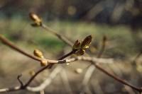 Весна 2020 в Туле: трели птиц и первые цветы, Фото: 19