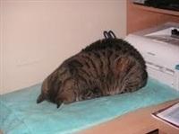 Котики устали, Фото: 1