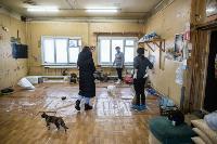Волонтеры спасли кошек из адской квартиры, Фото: 24