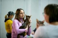 Пряничные кошки, Фото: 15
