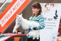 Выставка кошек в МАКСИ, Фото: 55