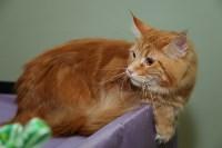 Выставка кошек. 21.12.2014, Фото: 6