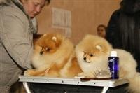 В Туле прошла всероссийская выставка собак, Фото: 15