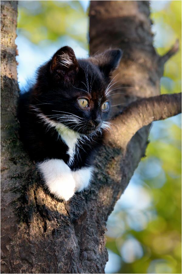 Любимый наблюдательный пункт котёнка Васеньки! Высоко сижу - далеко гляжу!