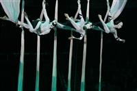 В Тульском цирке прошла премьера аква-шоу, Фото: 41