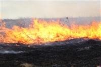 Сразу в нескольких районах Тульской области загорелись поля, Фото: 4