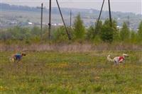 В Туле состоялись собачьи бега, Фото: 48