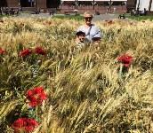 Цветочный джем: Тульское поле в Москве, Фото: 5