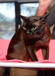 Выставка кошек в Искре, Фото: 33