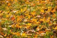 Золотая осень в Туле-2019, Фото: 103