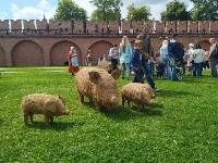 В Тульском кремле открылся фестиваль «День пряника», Фото: 2