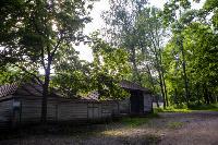 Летний день в Ясной Поляне, Фото: 5