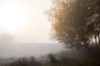 Центральный парк, утро, осень, Фото: 2