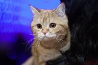 Тульские котики, Фото: 3