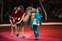 «Шоу Слонов» в Тульском цирке, Фото: 11