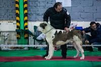 Выставка собак в Туле, Фото: 106
