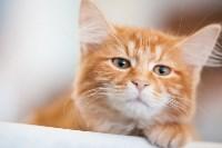 Международная выставка кошек. 16-17 апреля 2016 года, Фото: 81