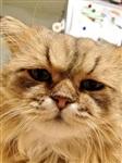 Грустный кот, Фото: 1