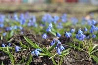 Краски весны в Туле, Фото: 1