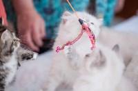 """Выставка """"Пряничные кошки"""". 15-16 августа 2015 года., Фото: 67"""