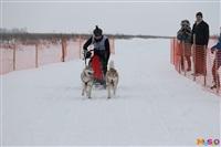 Куликово поле. Гонки на собачьих упряжках., Фото: 85