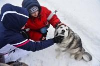 Праздник северных собак на Куликовом поле , Фото: 13