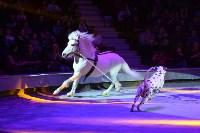 Цирковое шоу, Фото: 66