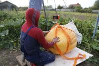 Гигантские тыквы из урожая семьи Колтыковых, Фото: 33