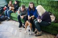Выставка собак в Туле, 29.11.2015, Фото: 35