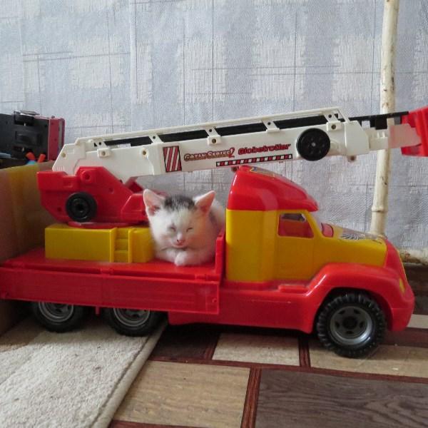 котенок-пожарный,пока без имени!пользуюсь конкурсом,чтобы найти ей добрых и заботливых хозяев!