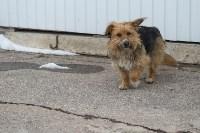 Крематорий для собак в Венёве, 24.03.2016, Фото: 42