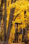Золотая осень в Туле-2019, Фото: 113