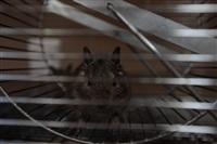 трогательный зоопарк, Фото: 16