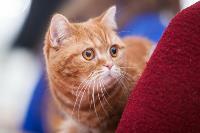 Тульские котики, Фото: 16