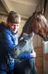 «Куликово поле» объявляет конкурс на лучшее имя для маленькой лошадки, Фото: 10