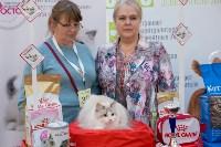 Выставка кошек в Туле, Фото: 88