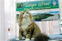 В Туле прошла международная выставка кошек «Зимнее конфетти», Фото: 3